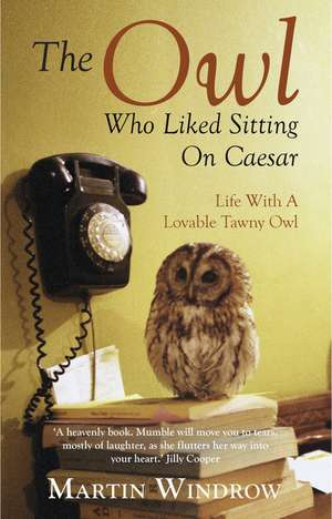The Owl Who Liked Sitting on Caesar de Martin Windrow