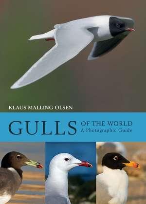 Gulls of the World imagine