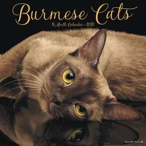 BURMESE CATS 2020 WALL CALENDAR de  Willow Creek Press