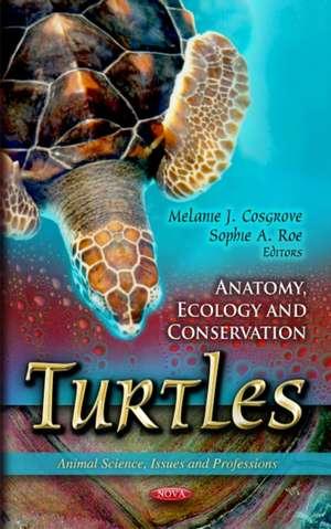 Turtles imagine