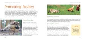 Keeping Chickens: Choosing, Nurturing & Harvests de Liz Wright