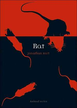Rat de Jonathan Burt