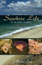 A Photographic Guide to Seashore Life in the North Atlantic – Canada to Cape Cod