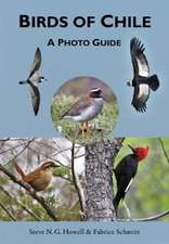 Birds of Chile – A Photo Guide