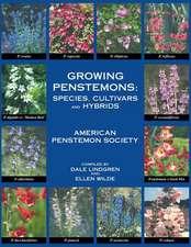 Growing Penstemons
