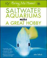 Saltwater Aquariums Make a Great Hobby