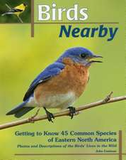 Birds Nearby
