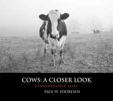 Cows: A Closer Look: A Photographic Essay