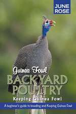 Guinea Fowl, Backyard Poultry
