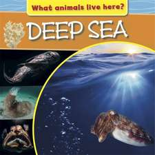 What Animals Live Here?: Deep Sea