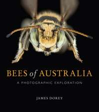 Bees of Australia: A Photographic Exploration
