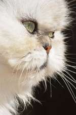 "Persian Cat Journal ""Before You Pet Me, May I Call You Blofeld?"""