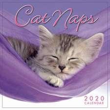 CAT NAPS M 2020