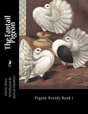 The Fantail Pigeon
