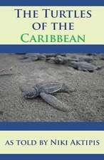 Turtles of the Caribbean as Told by Niki Aktipis