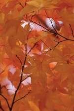 Pallid Leaves Journal