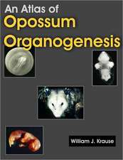 An Atlas of Opossum Organogenesis