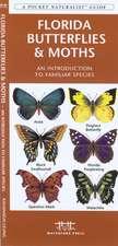 Florida Butterflies & Moths:  An Introduction to Familiar Species