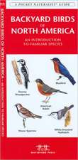 Backyard Birds of North America:  An Introduction to Familiar Species