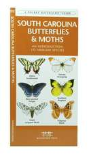 South Carolina Butterflies & Moths:  An Introduction to Familiar Species