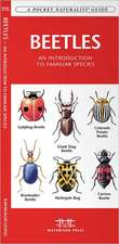 Beetles:  An Introduction to Familiar North American Species