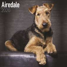 AIREDALE TERRIER W 2020