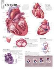 The Heart Chart: Laminated Wall Chart