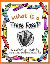 What Is a Trace Fossil?