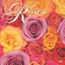 Roses - Rosen 2020 - 18-Monatskalender