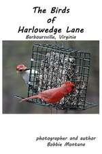 The Birds of Harlowedge Lane