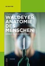 Waldeyer – Anatomie des Menschen