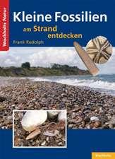 Kleine Fossilien am Strand entdecken