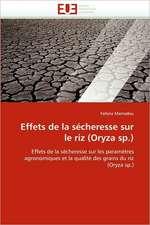 Effets de la sécheresse sur le riz (Oryza sp.)